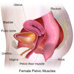 womens health physio