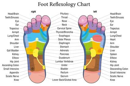 Reflexology exeter chart
